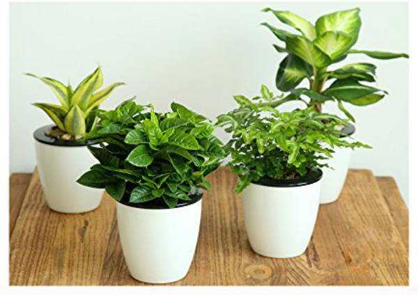 Mkono 3 Pack Self Watering Planter