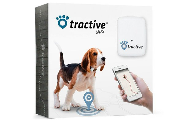 Best GPS tracker for dogs cats and animals
